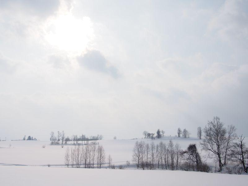 美瑛の冬、北の大地の絶景!パッチワークの路のお散歩旅