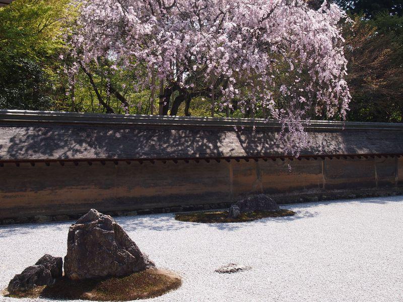 京都の路面電車「嵐電」で巡る!春の花の名所と世界遺産