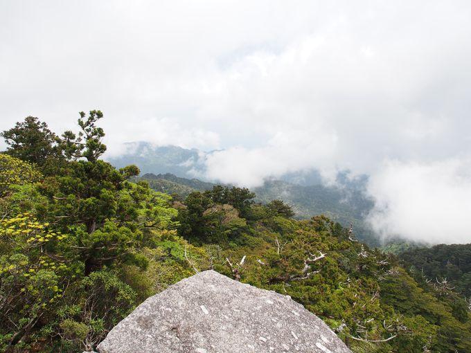 山登りのご褒美!太忠岳・標高1497mからの大パノラマ