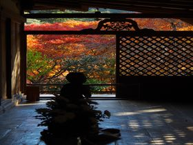 鳥獣人物戯画だけじゃない!紅葉の名所・秋の京都「高山寺」|京都府|トラベルjp<たびねす>