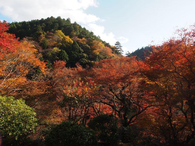 石水院、南縁から望む三尾の紅葉