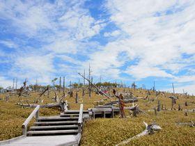 楽に山の絶景が楽しめる百名山登山?奈良「大台ケ原」に行こう!!|奈良県|トラベルjp<たびねす>