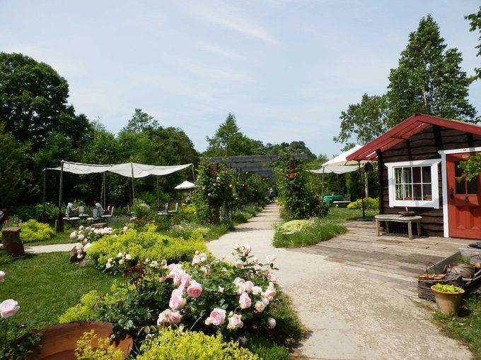 「銀河庭園」・小さなバラの村、カフェ