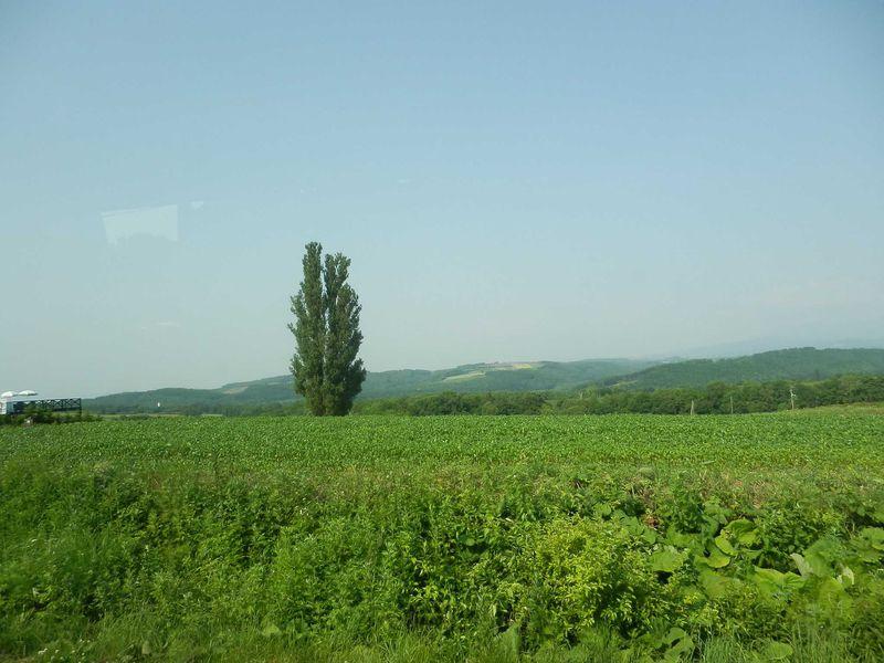 毎年訪れてしまう「美瑛町の丘」♪
