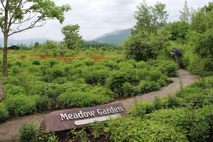 季節の野の花が楽しめる「メドウガーデン・野の花の庭」