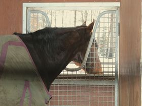 馬との触れ合いが楽しめる!北海道・冬の「ノーザンホースパーク」