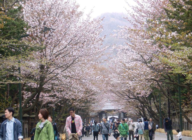 開拓の神様を祀っているパワースポット!桜花咲く・北海道神宮♪