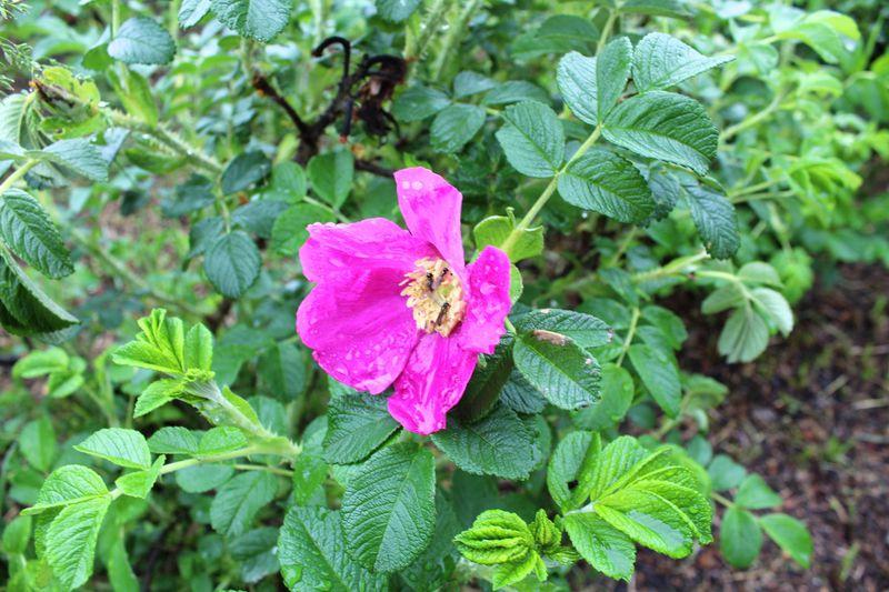 六花亭の包装紙が庭園に!可憐な野の花が咲く♪十勝「六花の森」