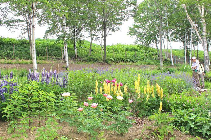 森の花園・カムイミンタラ