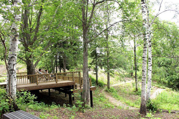森の迎賓館・「癒しの谷」