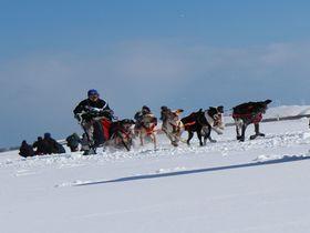 犬好き必見!「JAPAN CUP 全国犬ぞり稚内大会」|北海道|トラベルjp<たびねす>