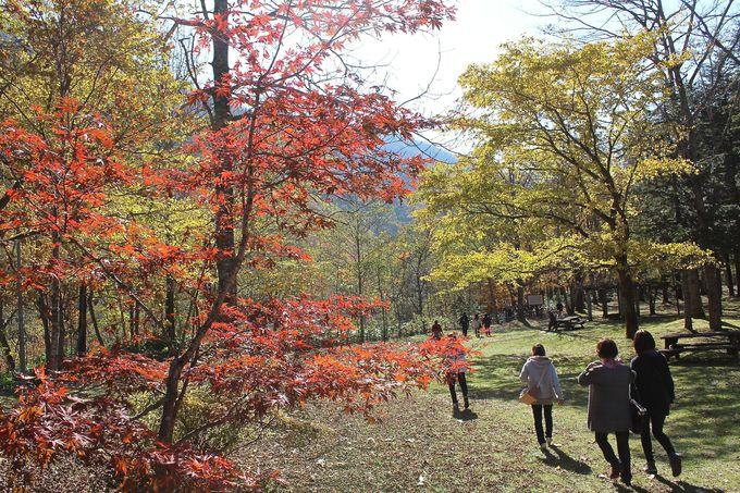 「札内川園地」の開園は4月〜10月