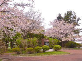 8000本の絶景桜並木!北海道石狩市「戸田記念墓地公園」|北海道|トラベルjp<たびねす>