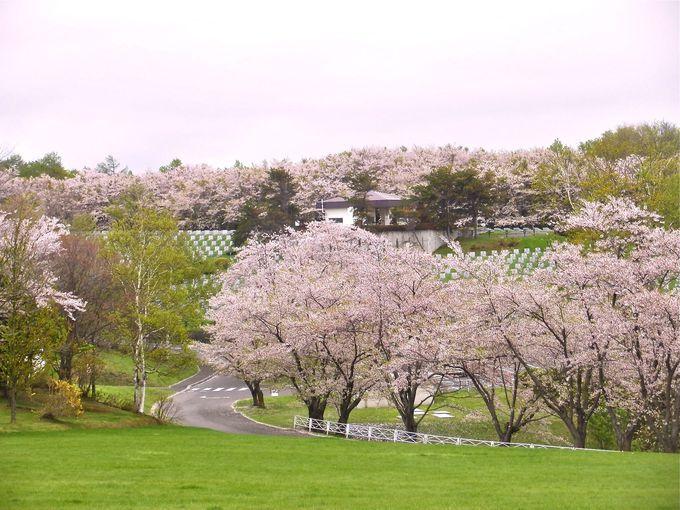 ソメイヨシノの開花は音声ガイダンスで親切に!