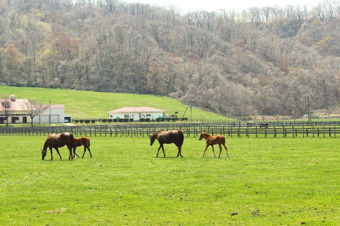 春には仔馬が見られます!