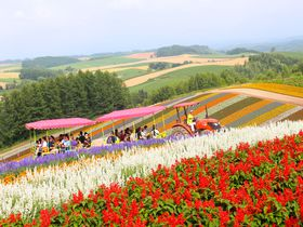 美瑛町「展望花畑・四季彩の丘」をトラクターバスで巡る!|北海道|トラベルjp<たびねす>