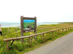 日本最大級の海岸草原!北海道北見市「ワッカ原生花園」|北海道|トラベルjp<たびねす>