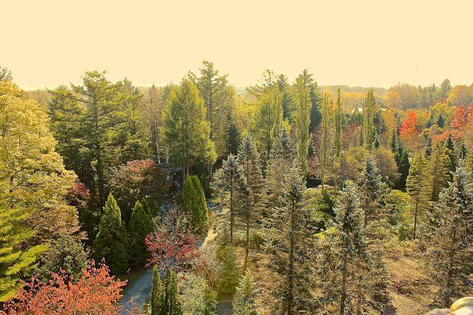 珍しい樹木がいっぱい!