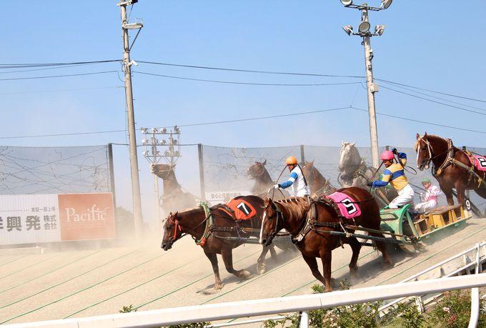 3.世界で唯一の「ばんえい競馬」を見てみよう!