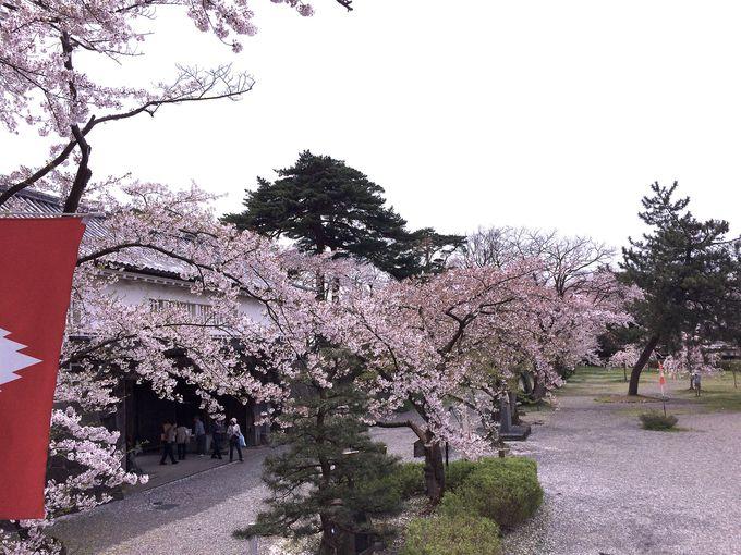 桜が彩る「表門」