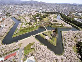 北海道一の桜の名所「函館五稜郭公園」とご当地グルメランチ4選|北海道|トラベルjp<たびねす>