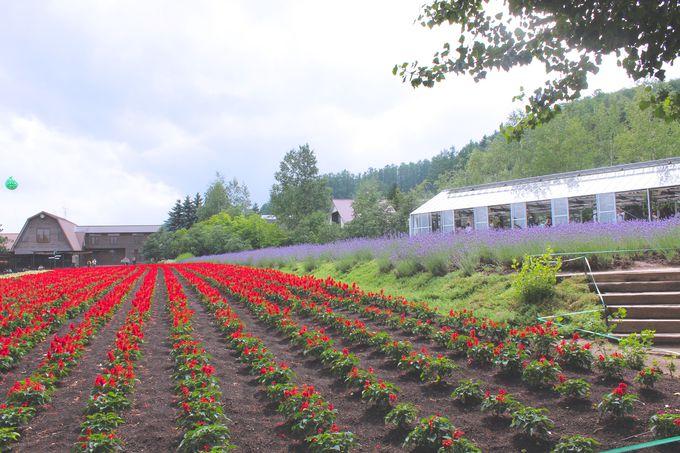 4種類のラベンダーが咲く「倖(さきわい)の畑」!