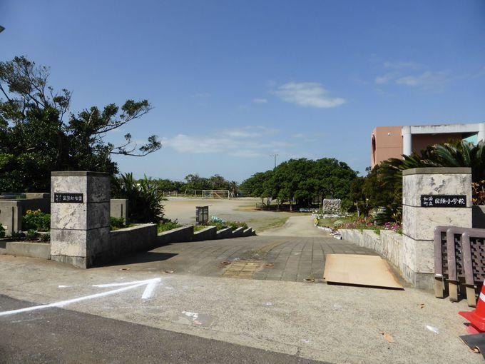 「日本一のガジュマル」は、和泊町立国頭(くにがみ)小学校の校庭内に
