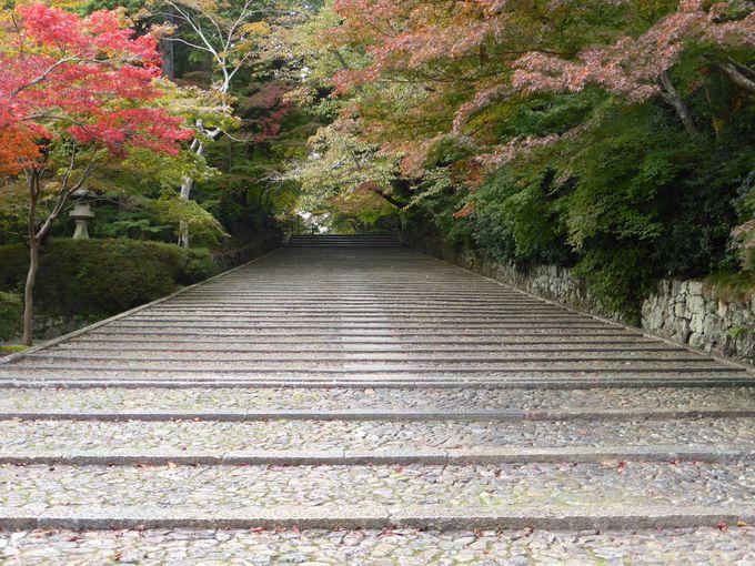 のんびり散策!歴史と安らぎの寺・長岡京「光明寺」