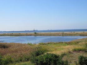 野鳥と人が集う場所「大阪南港野鳥園」は国際的に認められた渡り鳥の中継地!