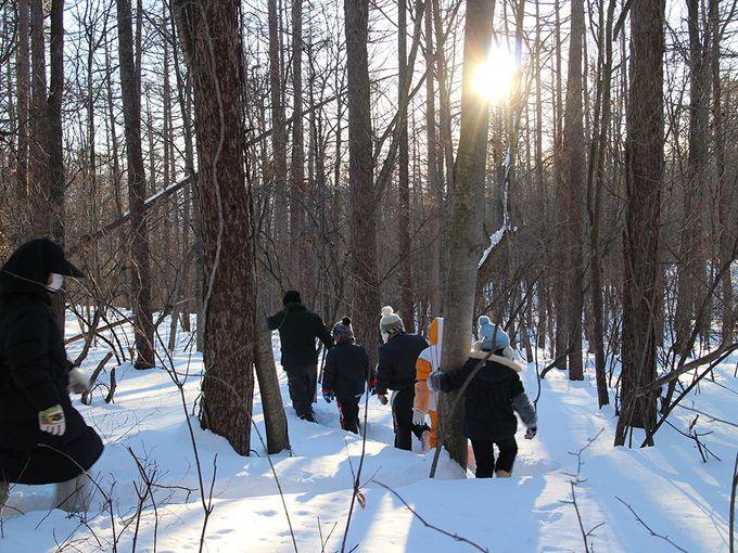 澄んだ空気をいっぱい吸い込んで、森の中を歩く