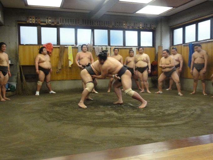 大迫力のぶつかり合い!相撲部屋で朝稽古を見よう