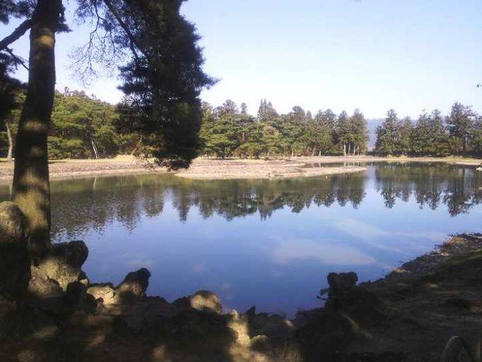 毛越寺の大泉ヶ池