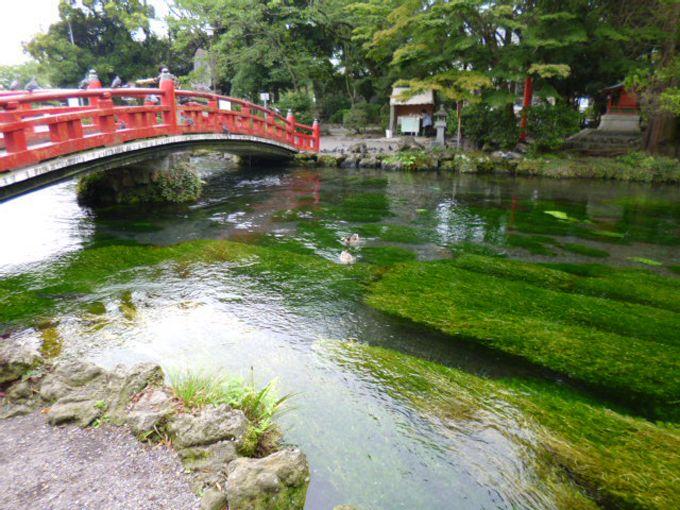 美しい緑と湧玉池、そこに暮らす、かわいい住人たちに癒される