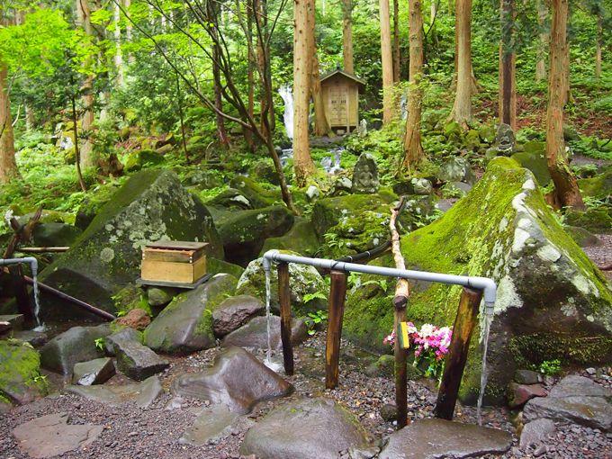 神秘の空間!森の中のパワースポット、苔生す石、流れる水音、鳥の声