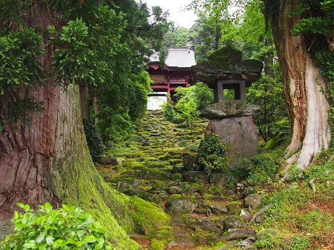 鳥海山の麓六百年の歴史を誇る名刹、その入り口は緑の絨毯に覆われて