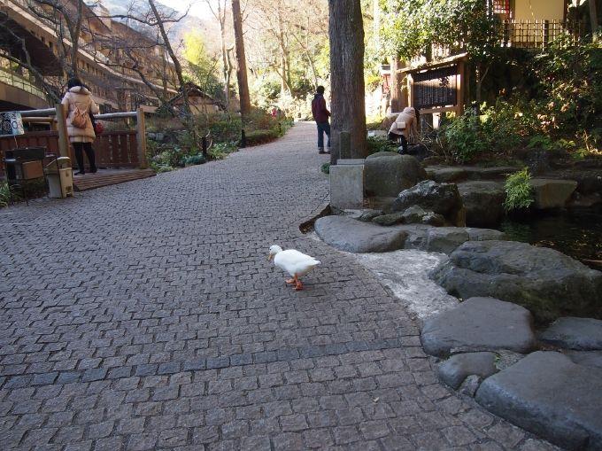 アヒルがお出迎え?箱根湯本温泉「天成園」庭園には名所の滝に縁結び神社、2つのパワスポ