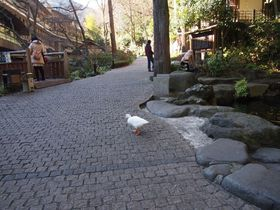 アヒルがお出迎え?箱根湯本温泉「天成園」庭園には名所の滝に縁結び神社、2つのパワスポ|神奈川県|トラベルjp<たびねす>