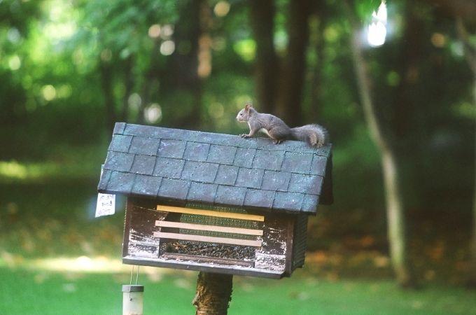 エゾリスに会える!森のスパリゾート「北海道ホテル」庭園に温泉、十勝グルメも満喫