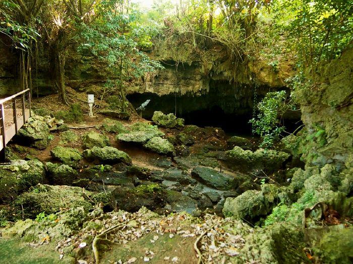 陸の中の海「ウンブギ」に、350年前のソテツのトンネル