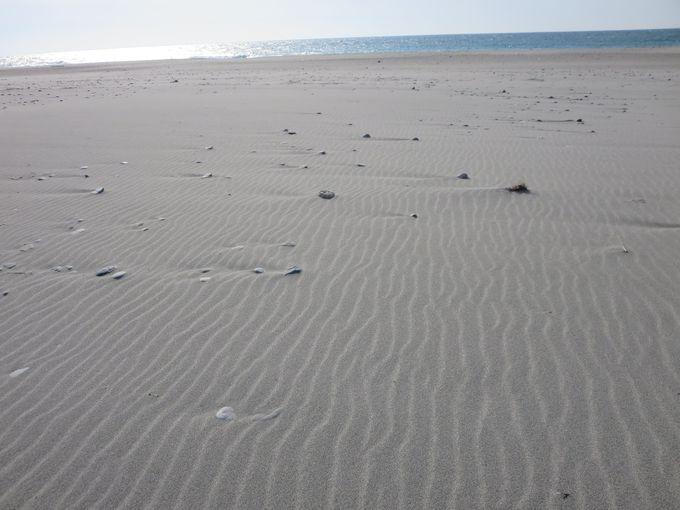 浜松にも砂丘が!「中田島砂丘」で太平洋の大海原と風紋を見る