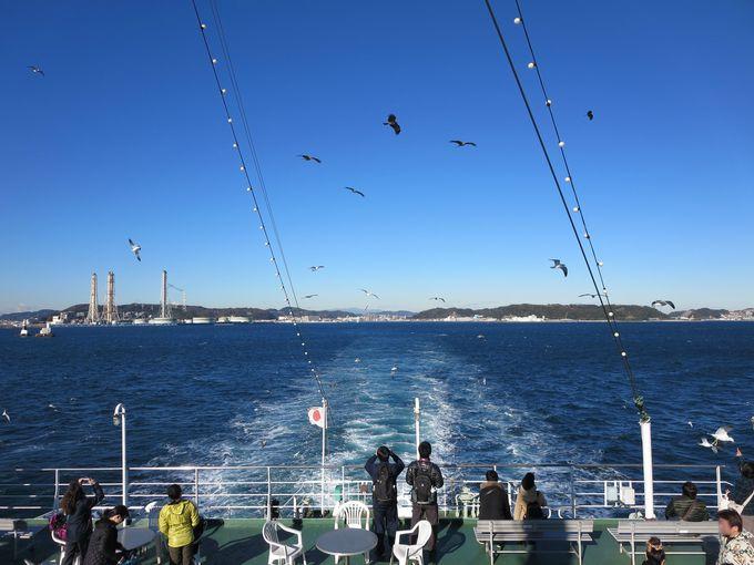 カモメと戯れながら東京湾フェリーで。