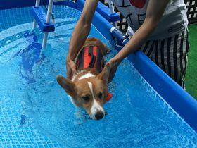 プールデビューする?伊豆高原「愛犬の駅」はワンコのための道の駅!|静岡県|トラベルjp<たびねす>