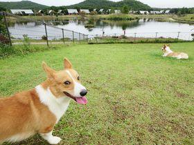 ペット専門誌がプロデュース!羽鳥湖高原レジーナの森「いぬのきもちコテージ」を満喫|福島県|トラベルjp<たびねす>