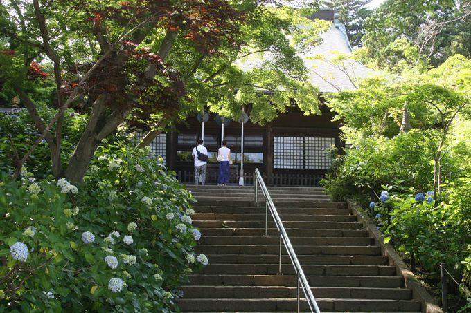 アジサイを愛でながら、階段を登れば本堂