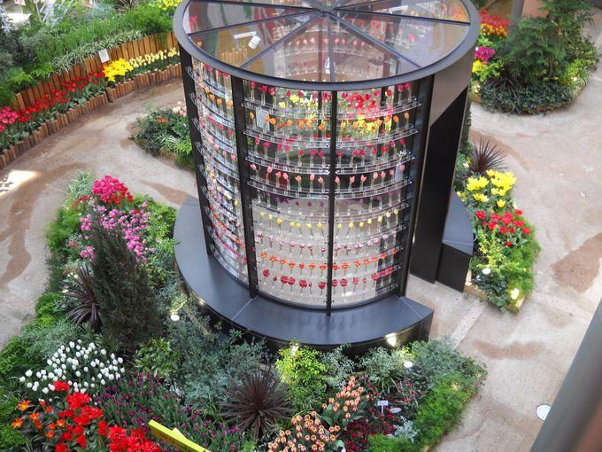 Wonder Gardenのチューリップパレス