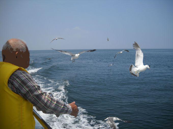 海鳥たちも愉しいクルージングの共演者