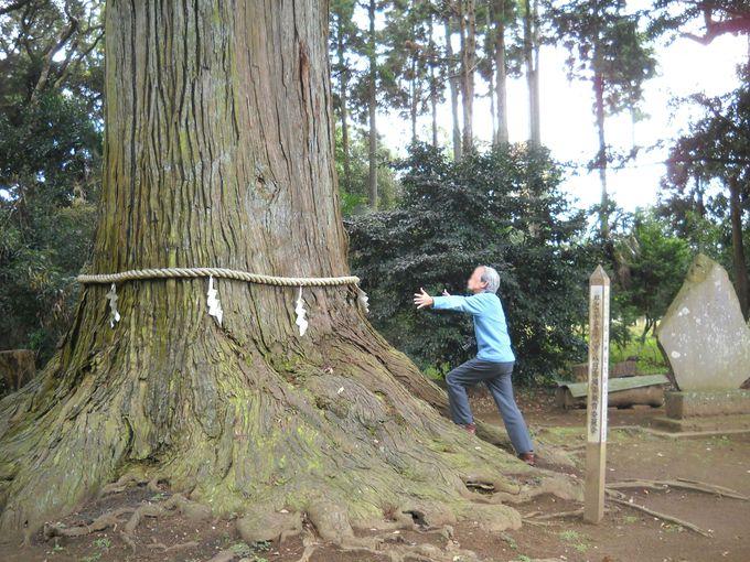 樹齢800年の御神木はパワースポットとして人気