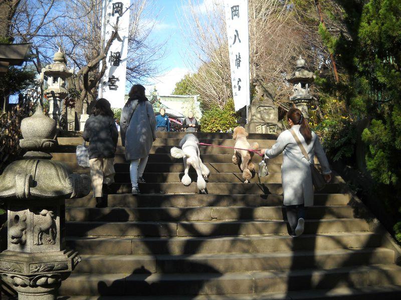 ペットも一緒にお参りしよう!東京「市谷亀岡八幡宮」