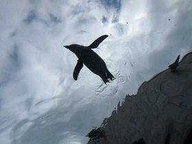 ペンギンが空を飛ぶ旭山動物園