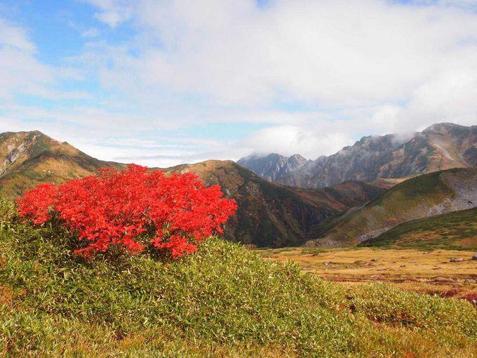真っ赤に紅葉するナナカマド越しの名峰「劔岳」